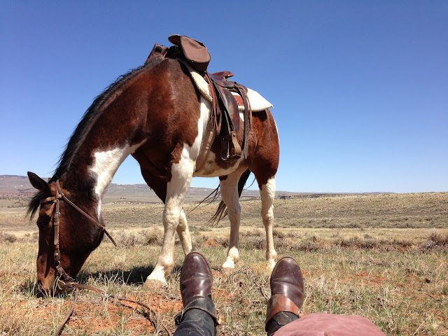 Hanging out with Patches on a cattle drive in Montana