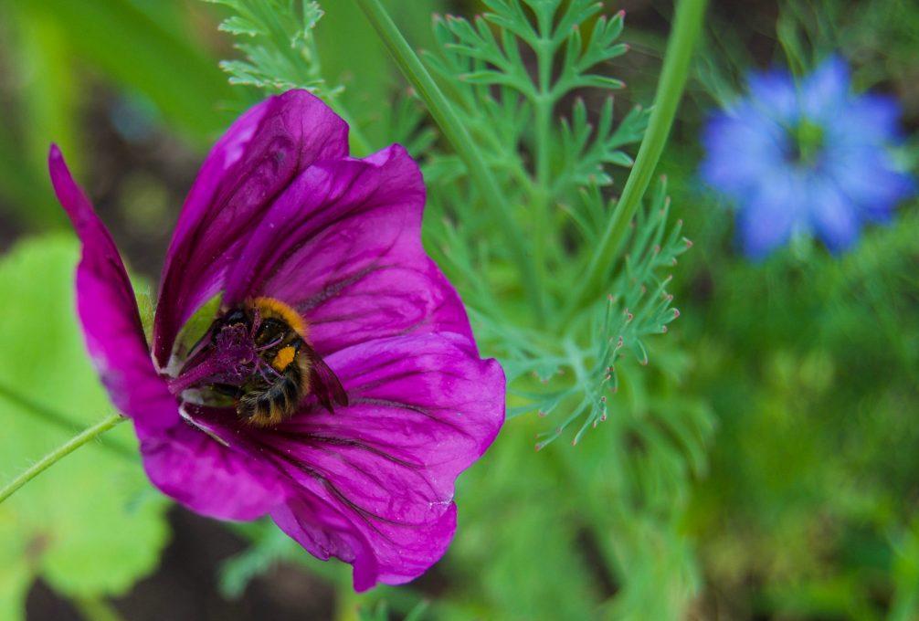 bumblebees-2