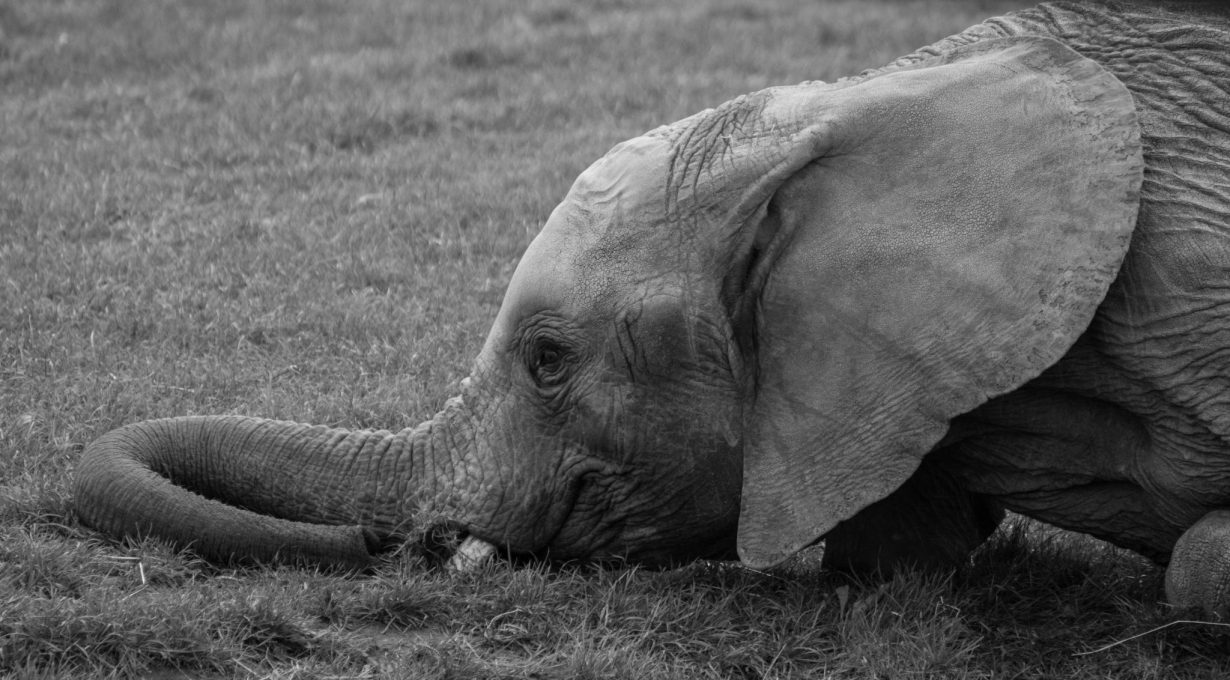 sometimes-its-hard-being-a-baby-elephant-2