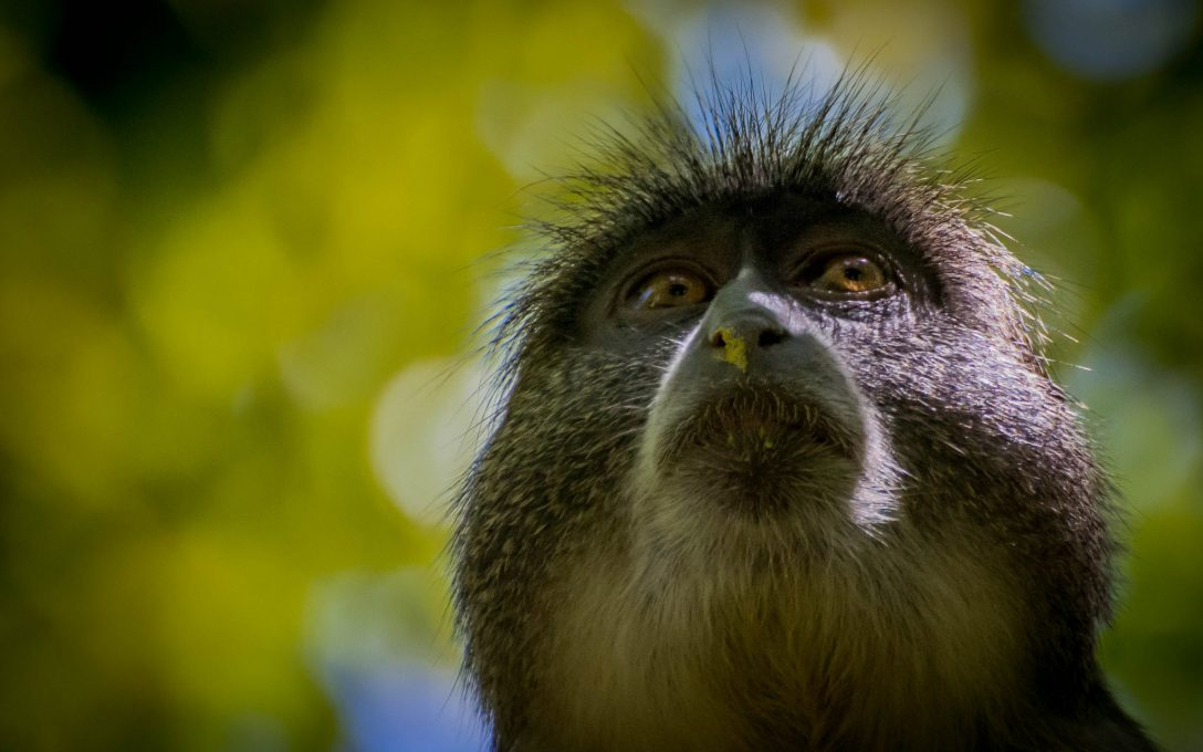 banana-monkey