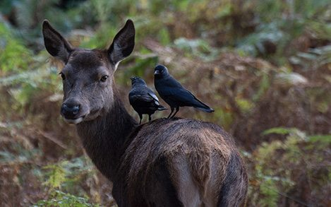 deerandbirdsresized