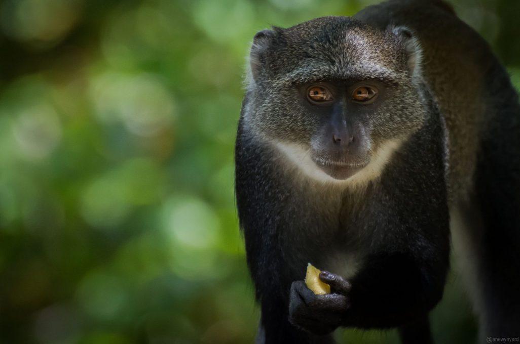 monkey-1-2