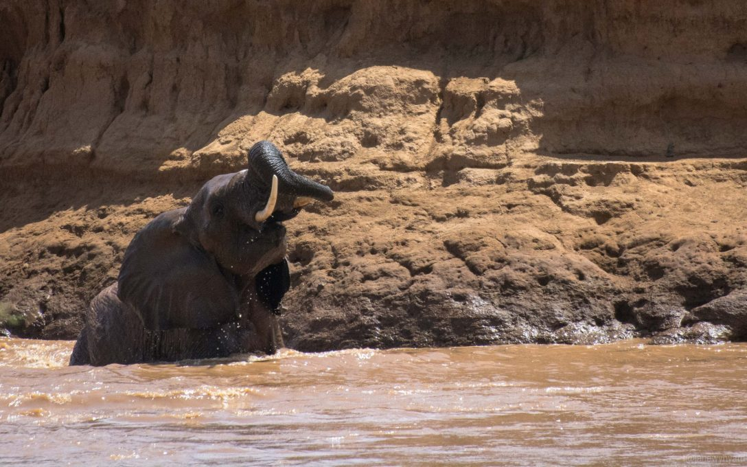 elephant-in-the-river-3-7