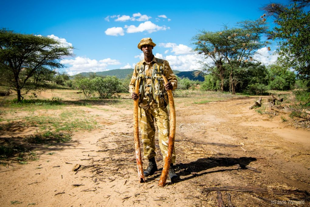 a ranger with tusks